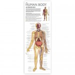 Discover Human Body Tin Set - Wonders of Learning