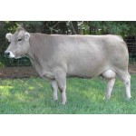 Cow - Braunvieh Cow - Schleich 13874