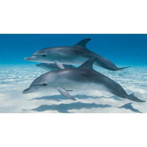 Schleich 14808 delfin
