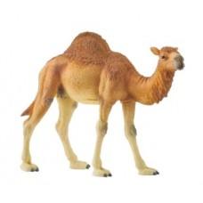 Dromedary Camel -  Schleich Wildlife 14832 - New 2020