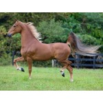 Horse - American Saddlebred Gelding - Schleich Horse Club 13913 - NEW for 2020