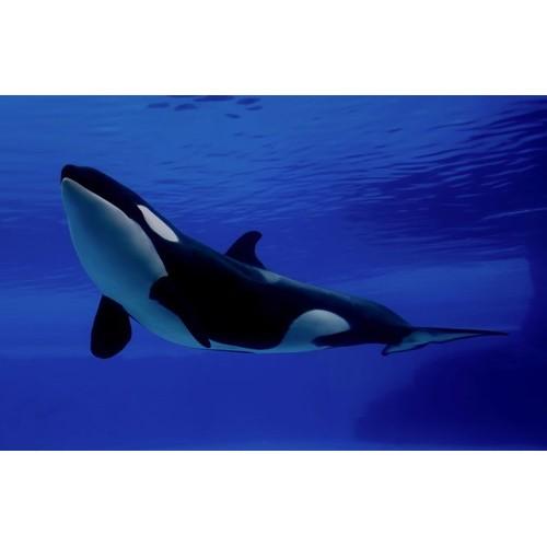 Schleich Wild Life Killer Whale 14807 NEW
