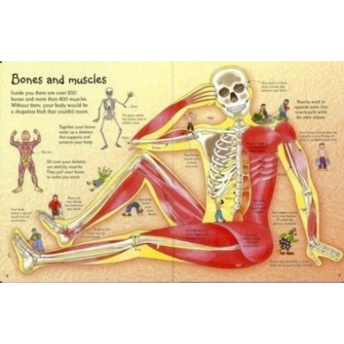 See inside your body usborne from who what why see inside your body usborne ccuart Gallery